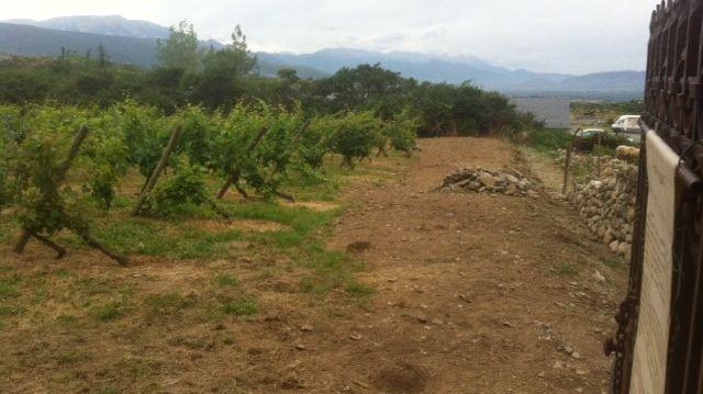 La plus haute vigne d'Europe à Sainte-Léocadie en Cerdagne.