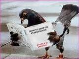 Intelligence animale - version pigeon
