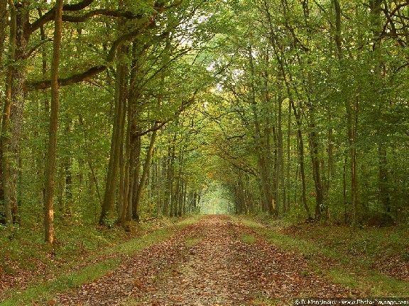 Forêt de Dourdan