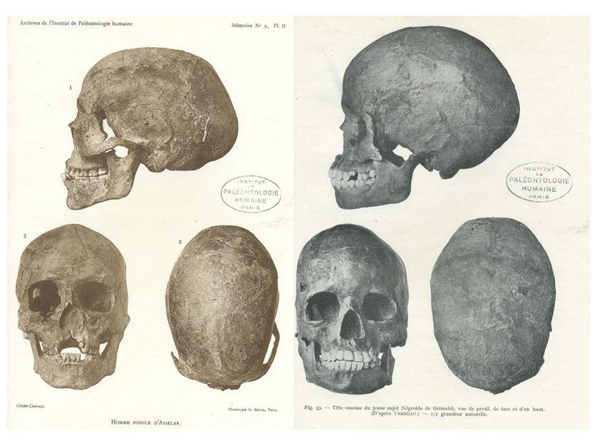 Différentes vues des crânes d'Asselar (Mali) et de la grotte des enfants (Grimaldi)