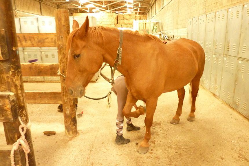 Un des participants de la journée du cheval se prépare dans la Drôme à Montvendre !