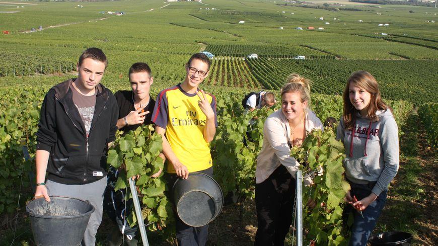 Vendanges 2013 - Lycée viticole d'Avize