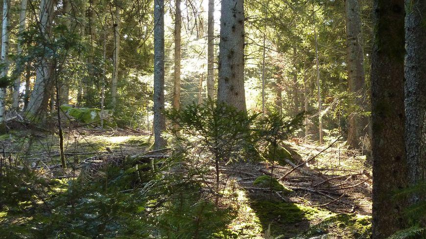 Une promenade dans les bois sous le soleil et la chaleur en octobre 2013. Image d'illustrations.