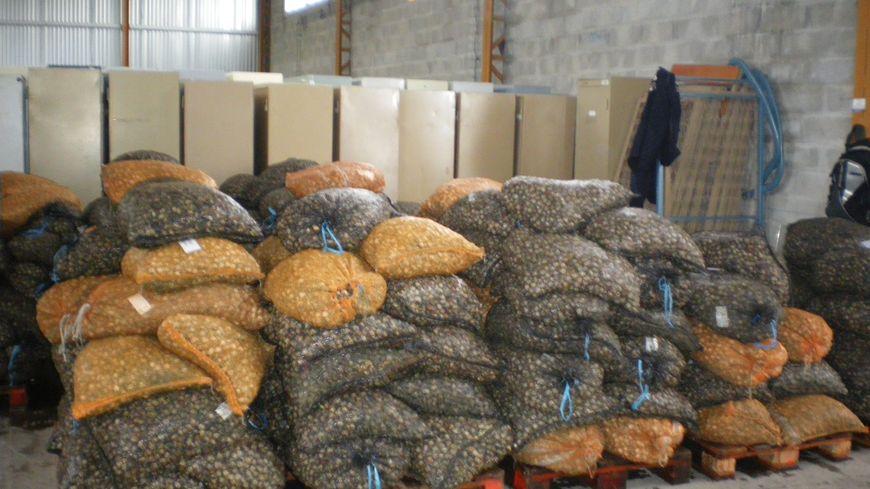 La gendarmerie maritime a saisi près de 10 tonnes de coques pêchées illégalement.