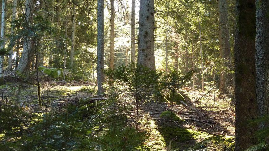 La lumière du soleil pénètre dans une forêt. Image d'illustration.