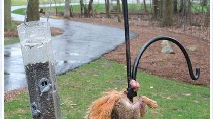 Dur dur pour l'écureuil de la Caisse d'Epargne!