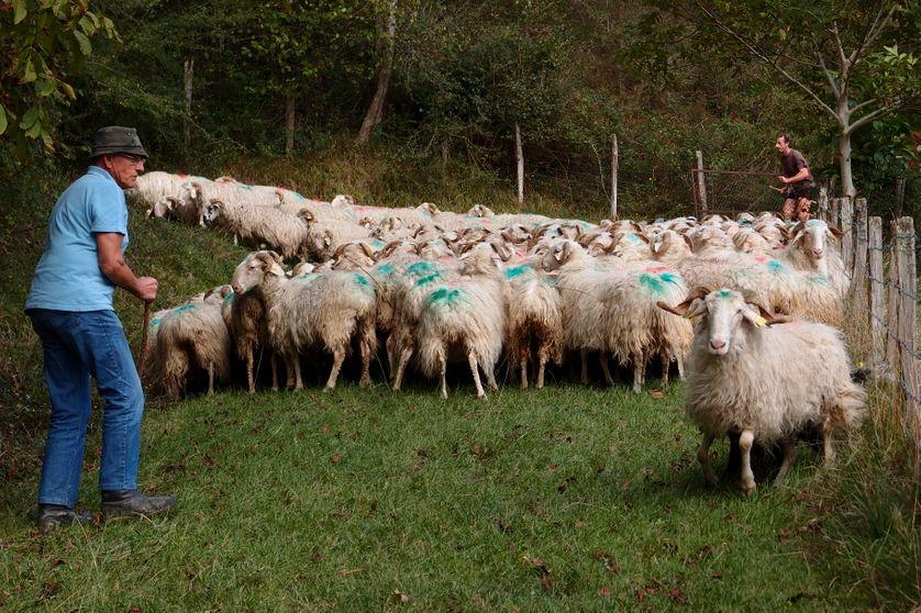 Fabrice Jaragoyhen, éleveur en bio au Pays Basque