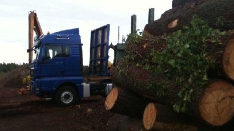 Le bois made in Landes pénalisé à l'exportation