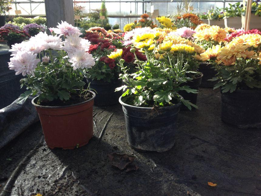 Des nouveaux pots, plus petits, adaptés aux urnes funéraires