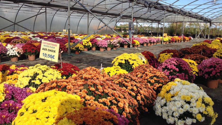 La tradition des chrysanthèmes se perpétue depuis 1918