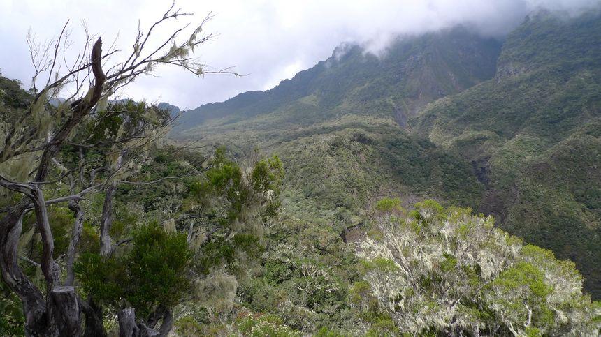 La Forêt Tamarin