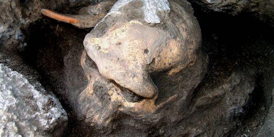 Le crâne fossile découvert à Dmanisi, en Géorgie.