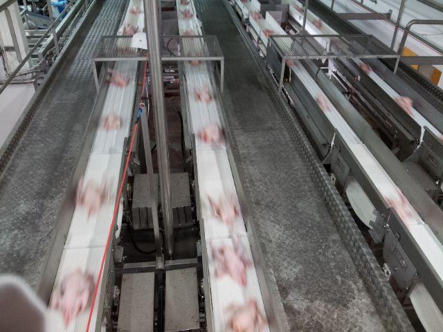 Les poulets sont congelés et vendus à 90% à l'étranger (Proche-Orient)