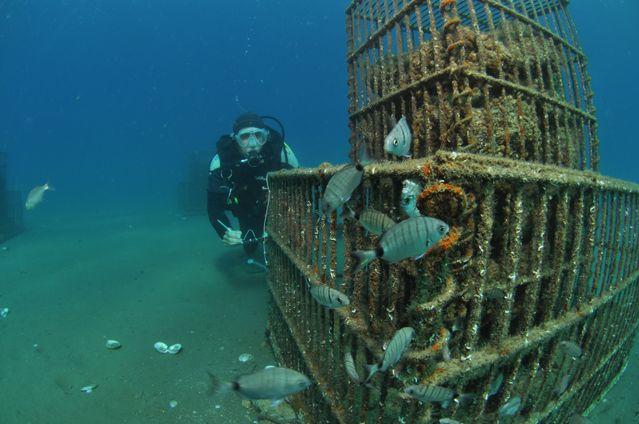 Sublimo, la nurserie des poissons