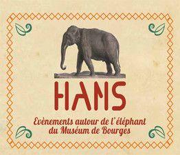 Hans, l'éléphant naturalisé du Museum d'Histoire Naturelle de Bourges