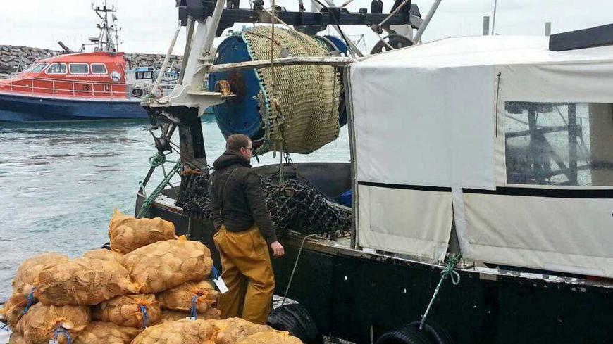 Un pêcheur débarque ses coquilles Saint-Jacques à Saint-Quay-Portrieux