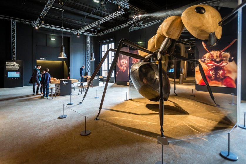 Exposition Mille milliards de fourmis au Palais de la découverte