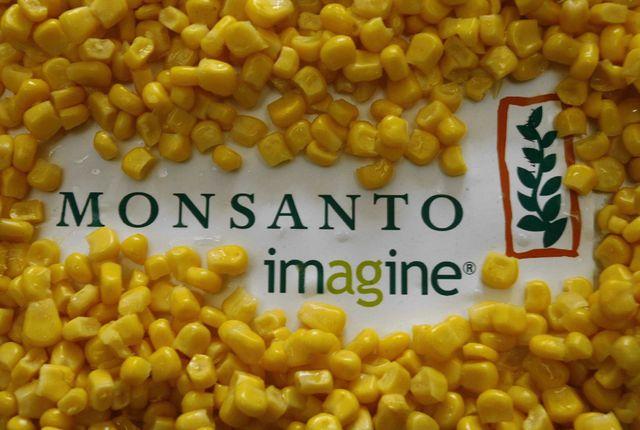 la maïs Monsanto avait été mis en cause dans l'étude