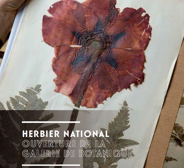Herbier 2.0