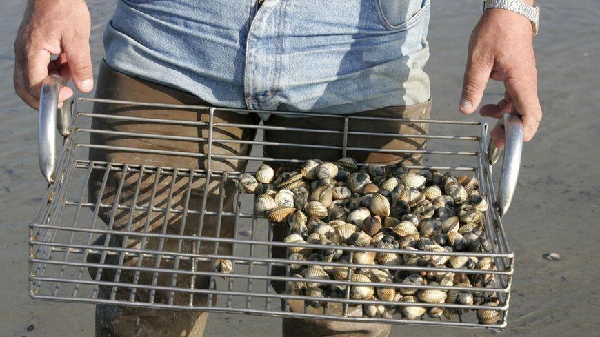 La pêche aux coques dans la Baie de Somme