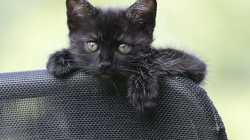 Le chat noir, grand ami du vendredi 13