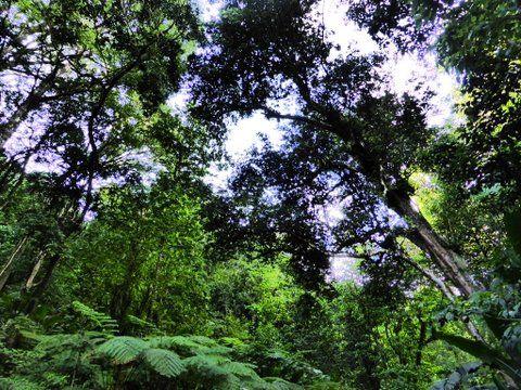 la forêt d'Absalon.