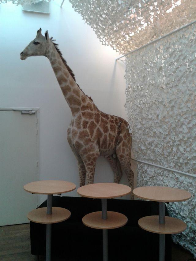 WECF - Sophie la girafe