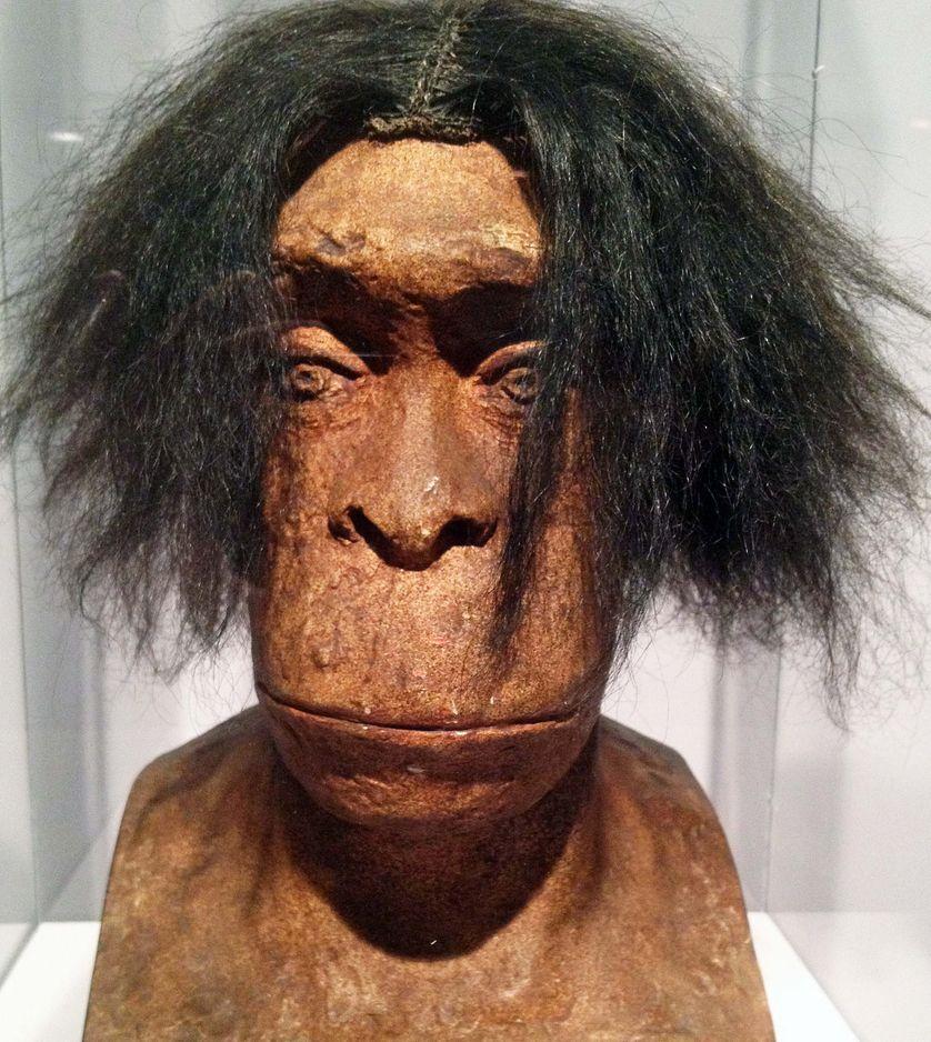 Monsieurou peut-être Madame Quina ? Buste de néandertalien réalisé par le sculpteur Charles Bousquet en 1913