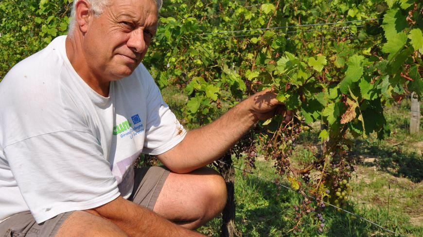 Christian Sabaté, viticulteur à Saint-Magne de Castillon, montre les dégâts sur ses pieds de vigne