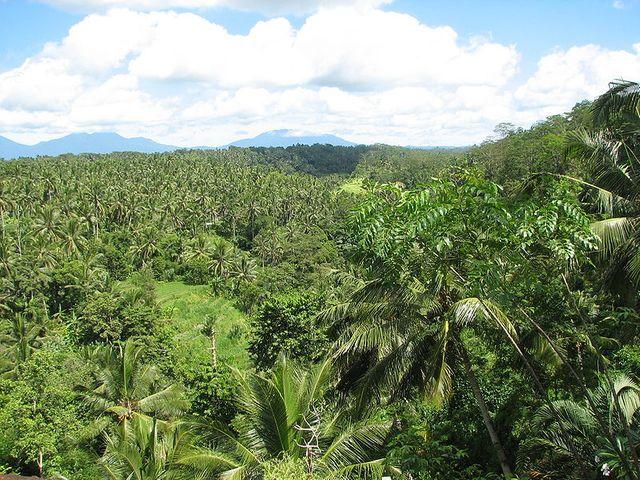 Forêt tropicale (Ile de Bali, Indonésie)