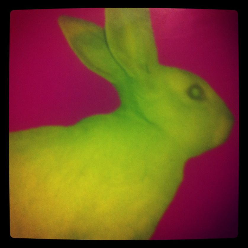 Lapin fluo