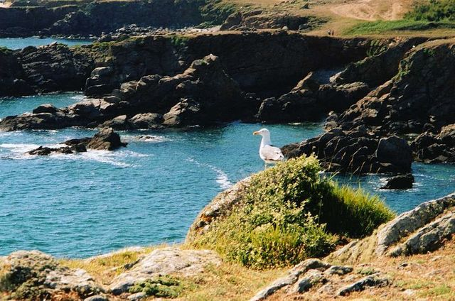 L'ïle d'Yeu - La côte sauvage