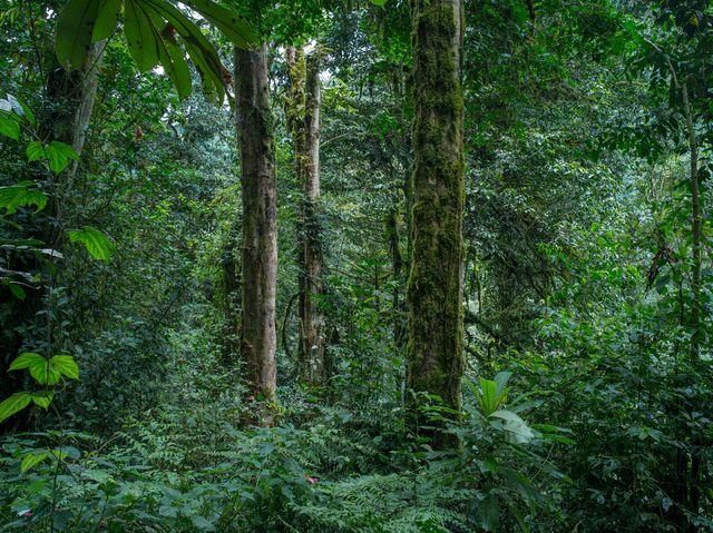 """Forêt primaire de Nyungwe, de la série """"Absences"""", Rwanda, mai 2014"""