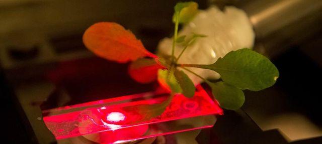 Plante Augmentée