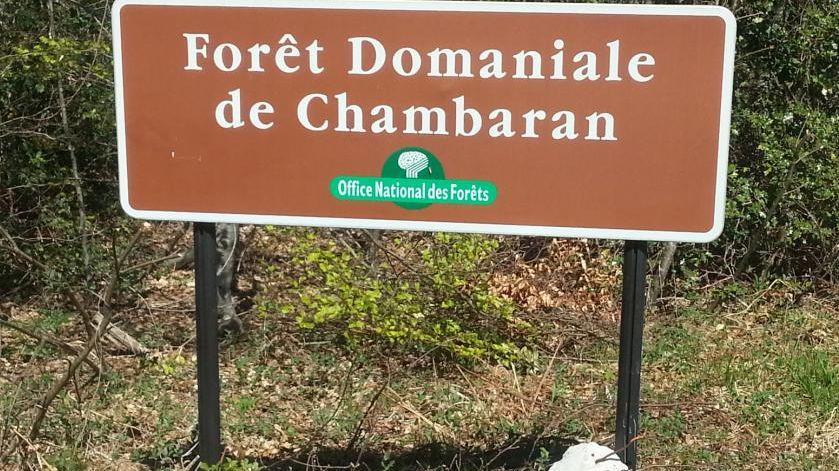Le parc devrait s'installé sur une zone humide de la Forêt domaniale de Chambaran.