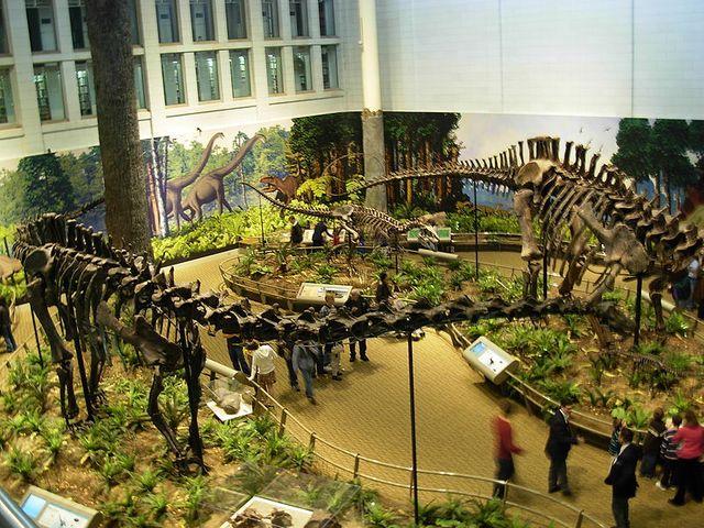 Diplodocus Allosaurus & Apatosaurus