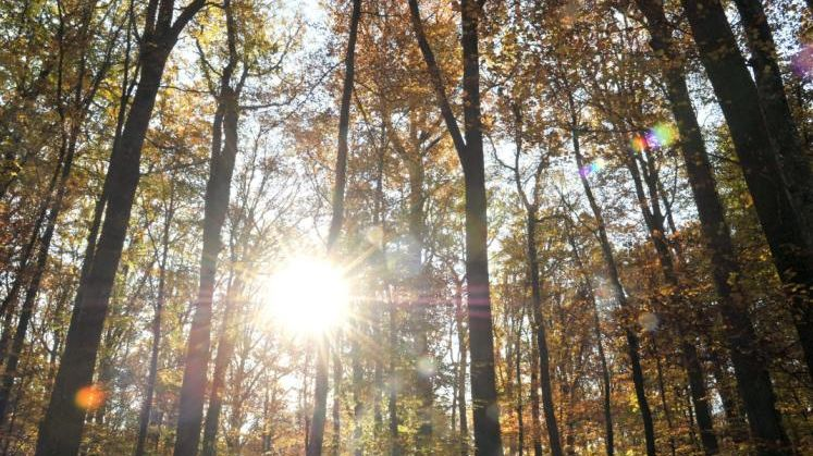 Clone of Le Center Parcs pourrait se nicher au cœur de la Forêt des Chambaran.