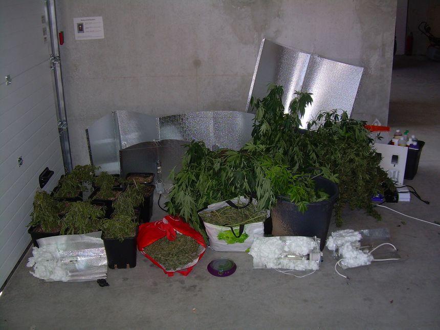 Le trafic de cannabis en ardèche le 9/4/14/ Merci de ne pas réutiliser