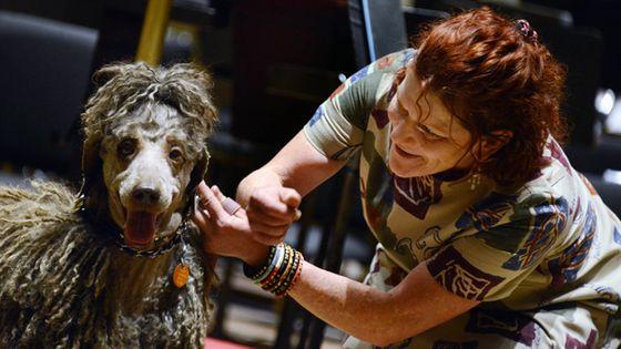 Le chien Bailey n'a pas réellement convaincu le chef par la sonorité de son aboiement mais figurera tout de même sur scène en raison de son style. (DR)