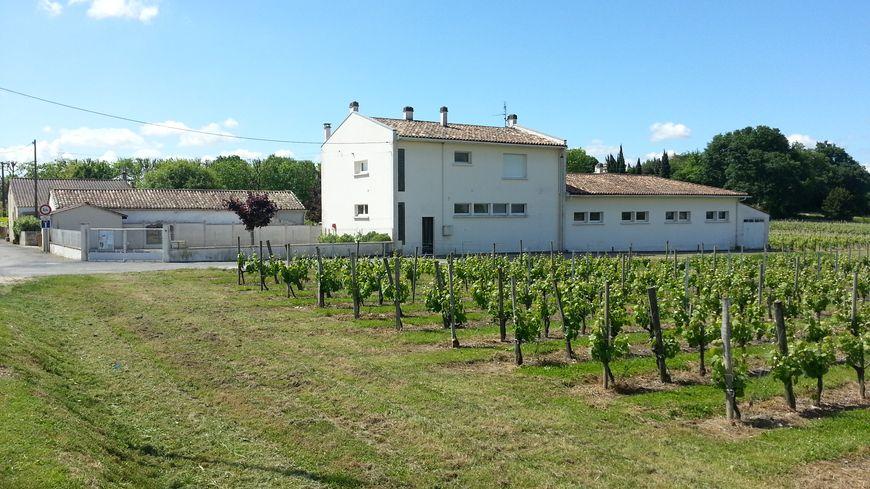 L'école de Villeneuve jouxte les parcelles de vignes régulièrement traitées