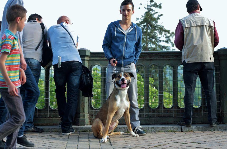 Rémi et Pattok le chien au Grand Prix de Pau