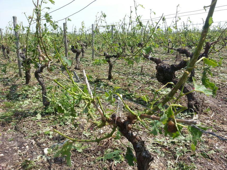 Au moins 300 hectares ont été ravagés au Nord-Est de Lesparre-Médoc