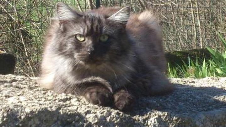 Les chats disparaissent à Montfaucon