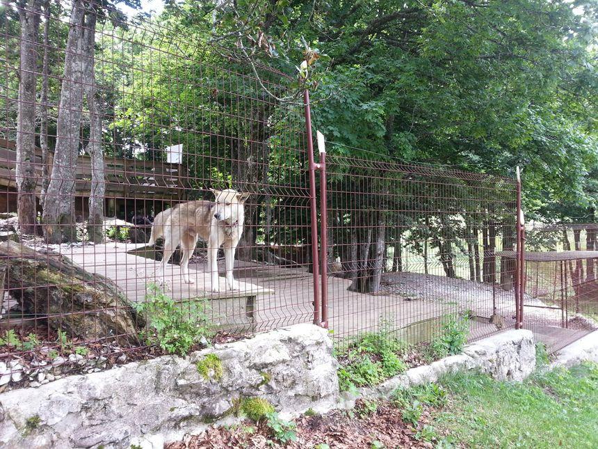 Le camp Nicolas Vanier à Vassieux en Vercors devait renforcer la sécurité des clôtures