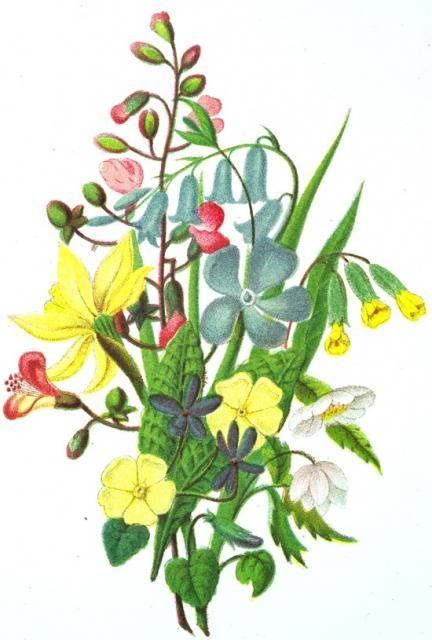 Fleurs bleues, jaunes et roses