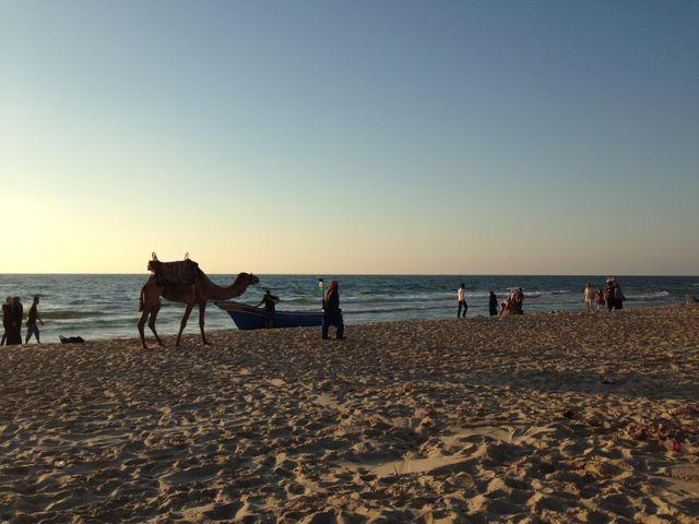 Gaza le soir