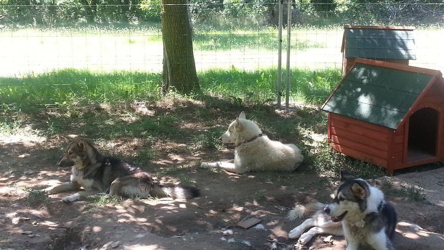 Les chiens du camp Vanier à Vassieux-en-Vercors ont tous été placés