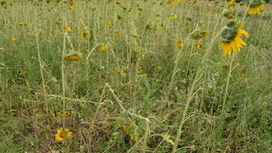 Dordogne : premiers bilans après la grêle de ce week-end
