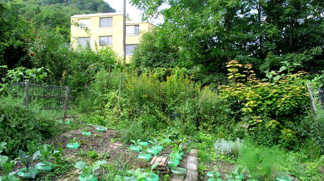 Depuis six mois, les résidents cultivent ensemble un potager