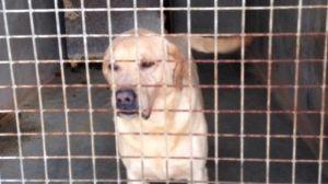 La SPA recueille les chiens et les chats abandonnés.